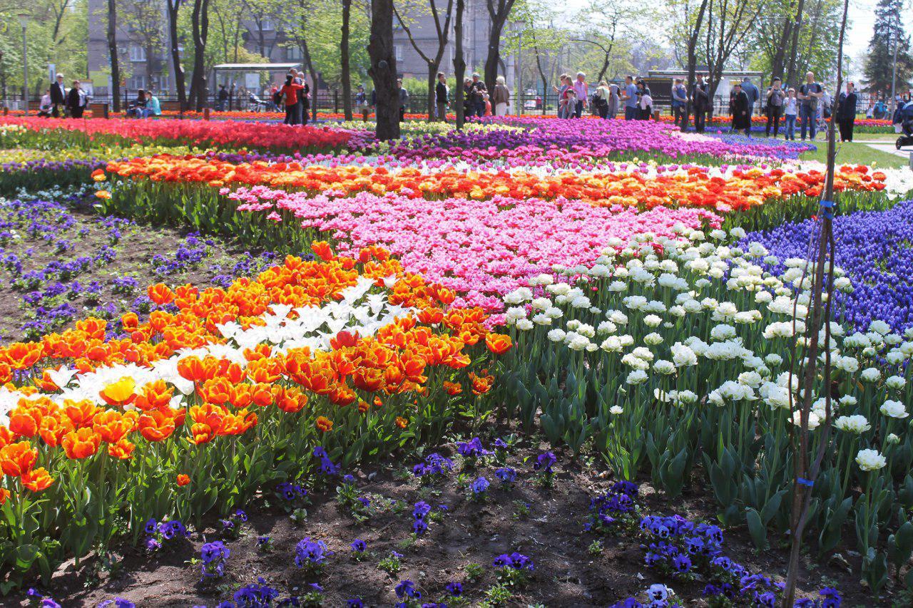 Фестиваль тюльпанів дивує маріупольців